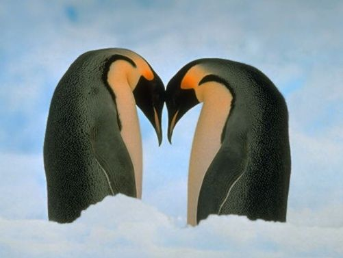 love_penguins